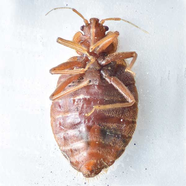 bed bug control vancouver reviews
