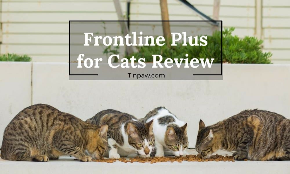 frontline plus reviews for cats