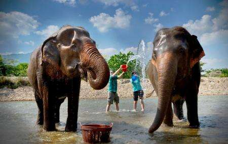 chiang mai elephant nature park reviews