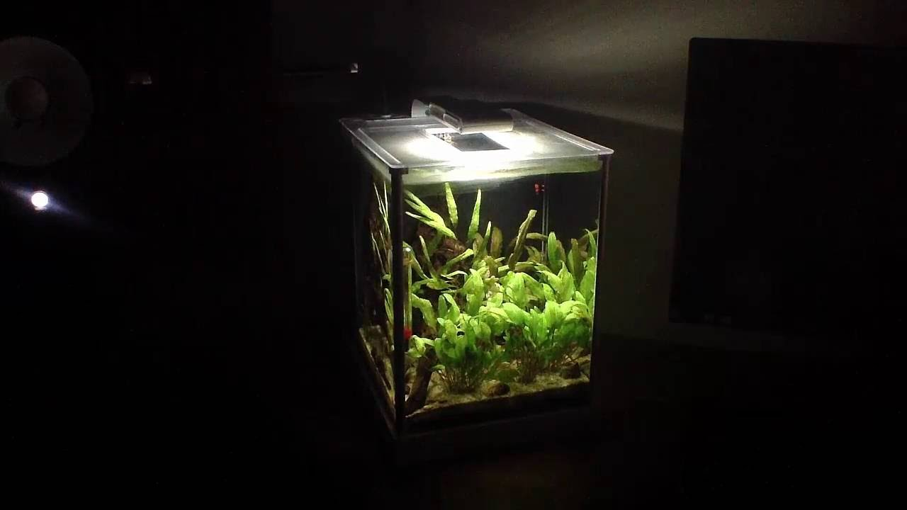 fluval spec 2 gallon review