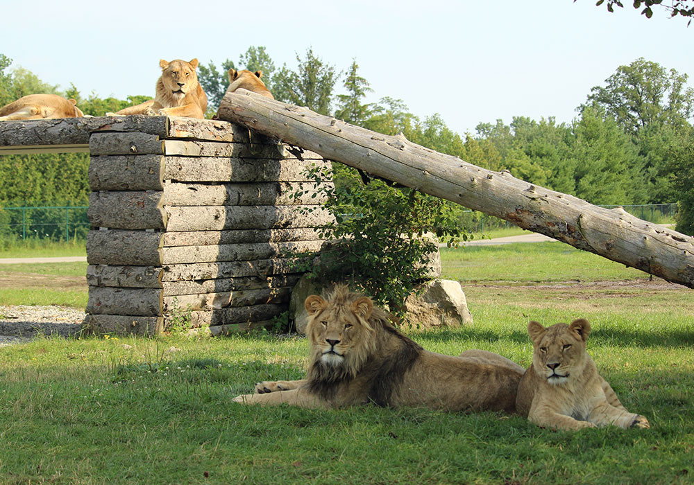 african lion safari ontario reviews