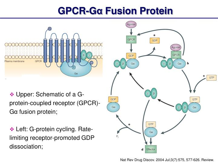 g protein coupled receptors review