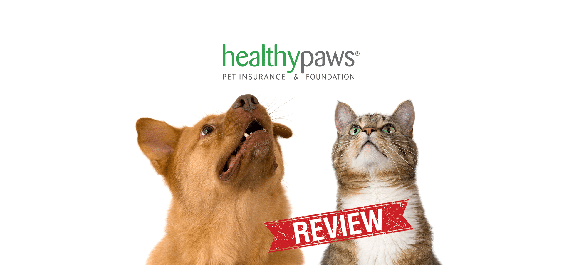 healthy paws pet insurance reviews