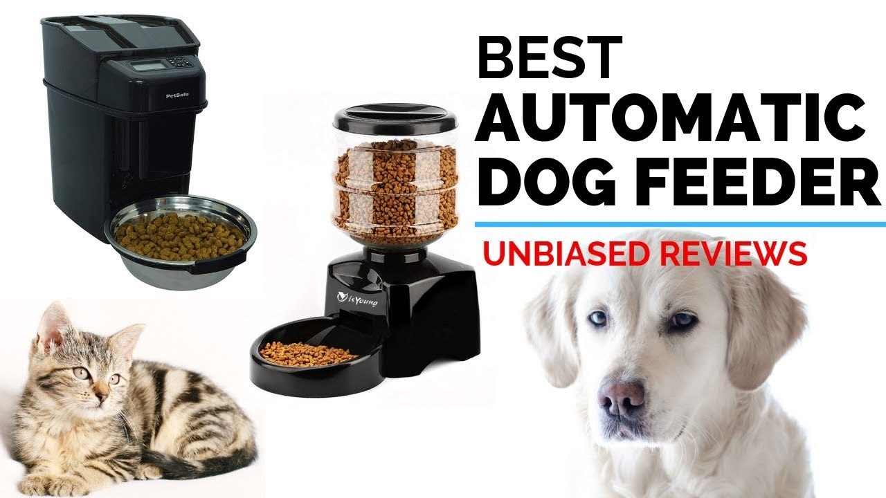 best automatic pet feeder review