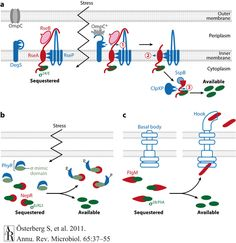 annual review of cell biology