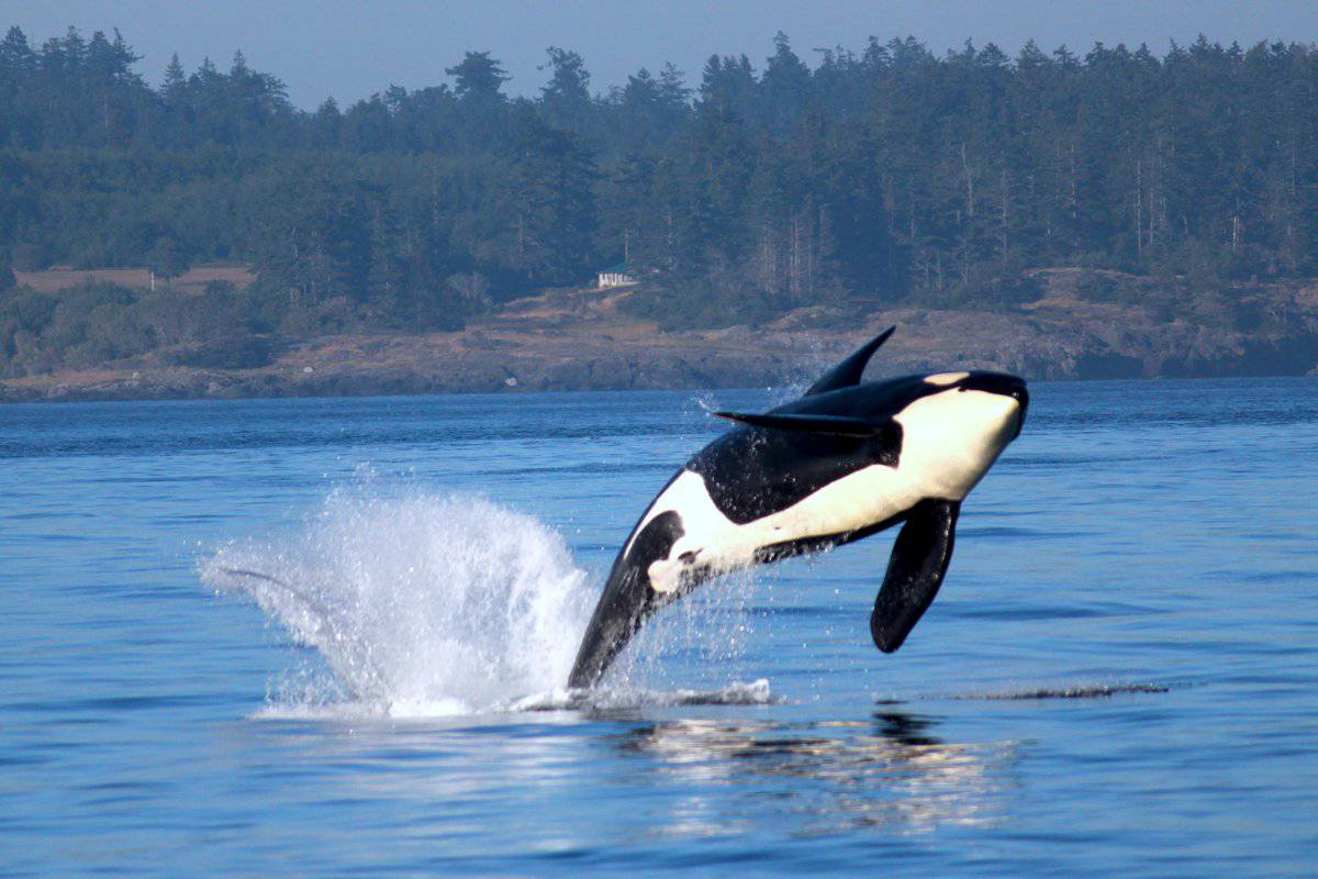 five star whale watching reviews