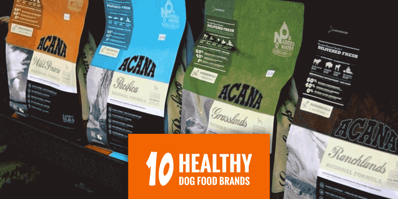 healthiest cat food brands reviews