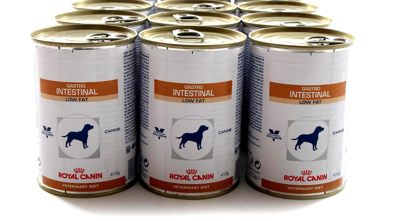 royal canin gastrointestinal dog food reviews